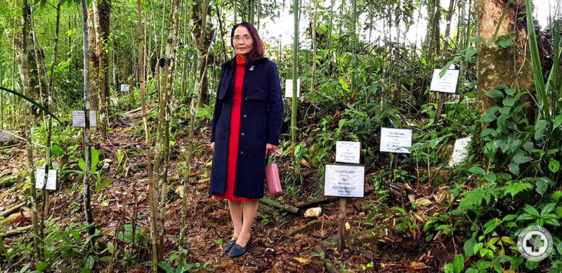 Bác sĩ Phương tại vườn dược liệu ở Hà Giang