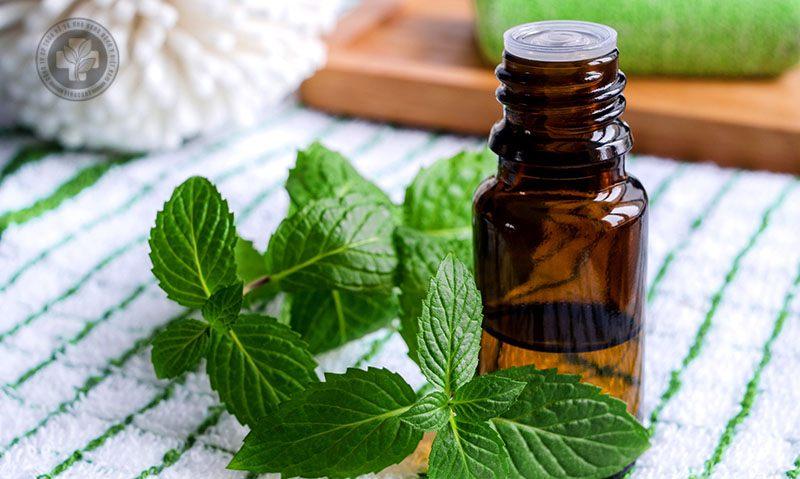 Tinh dầu bạc hà trị viêm mũi dị ứng hiệu quả