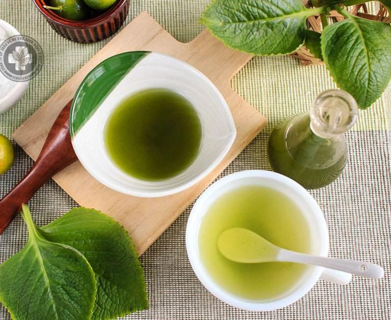 Uống nước lá húng chanh giúp trị dị ứng nổi mề đay hiệu quả
