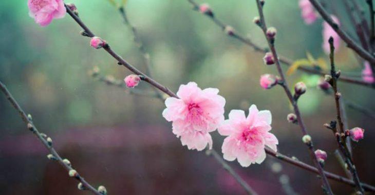 Người bệnh viêm mũi dị ứng nên cảnh giác với phấn các loài hoa ngày Tết