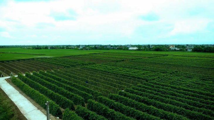 Trung tâm đẩy mạnh phát triển các vườn biệt dược đạt chuẩn GACP - WHO
