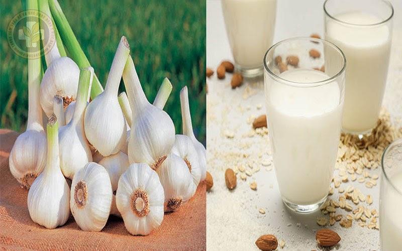 Tỏi kết hợp với sữa giúp giảm viêm, đau hiệu quả
