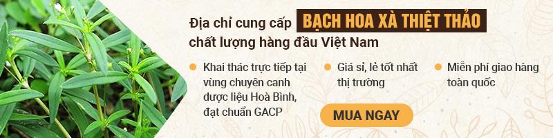 Bạch hoa xà thiệt thảo Vietfarm chất lượng cao