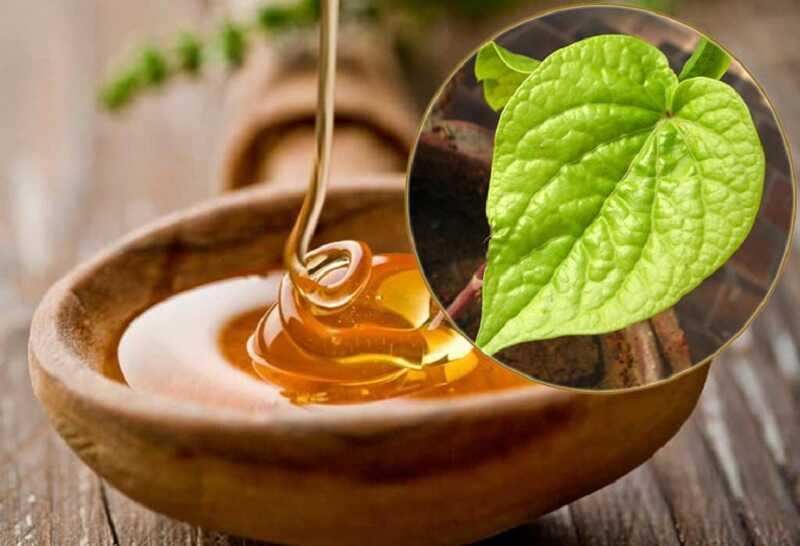 Kết hợp lá trầu không và mật ong sẽ mang lại hiệu quả bất ngờ cho người bị viêm amidan