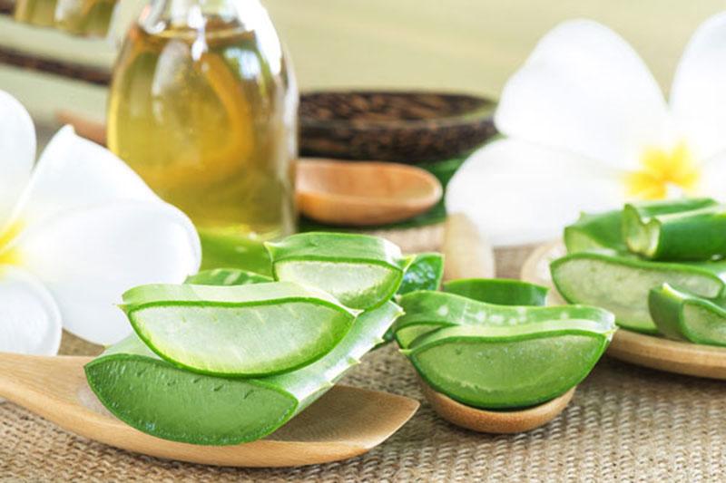 Dầu dừa kết hợp nha đam là công thức thường gặp để chăm sóc và chữa bệnh về da
