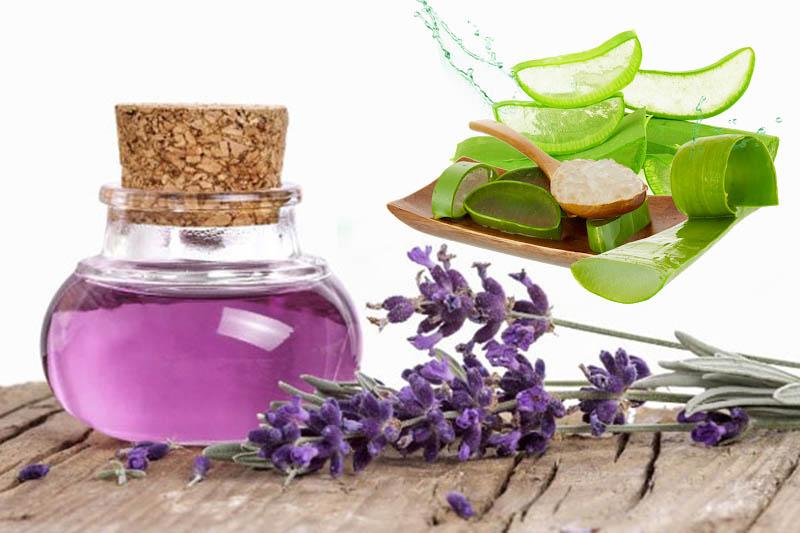 Kết hợp nha đam và tinh dầu hoa oải hương để tăng công dụng chữa bệnh