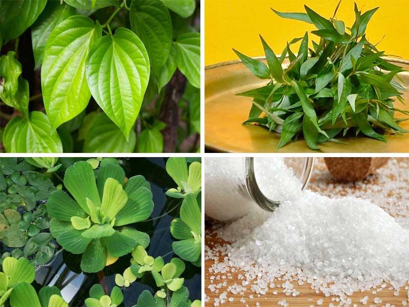 Kết hợp nhiều nguyên liệu với lá trầu không để chữa vảy nến
