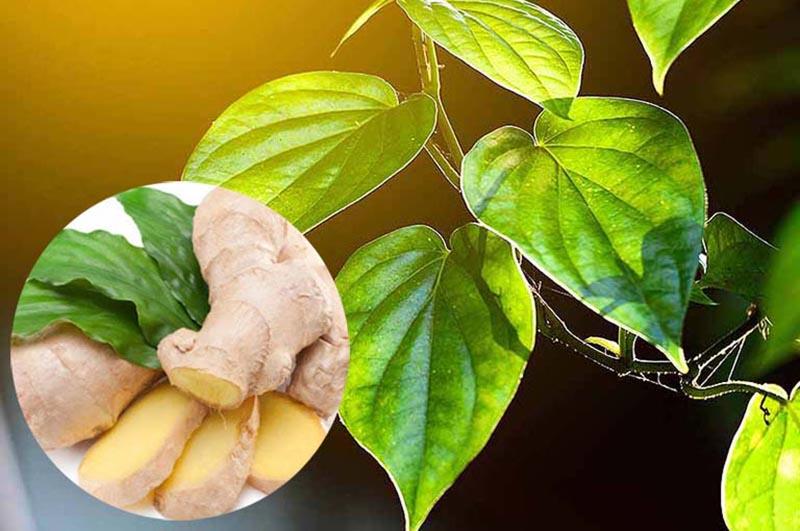 Gừng tươi giúp tăng tính sát khuẩn, chống viêm nhiễm da