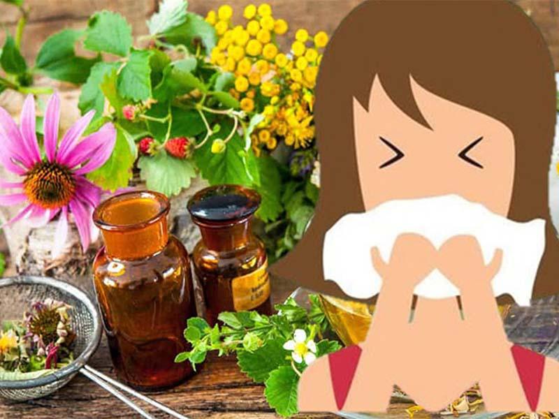 Cây thuốc chữa viêm mũi