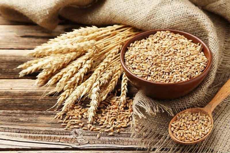 Người bệnh vảy nến không nên ăn quá nhiều lúa mì, lúa mạch