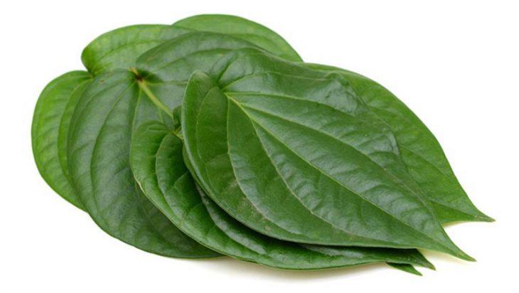 Không lạm dụng cách chữa viêm phế quản mãn tính bằng lá trầu không trong trường hợp bệnh nặng