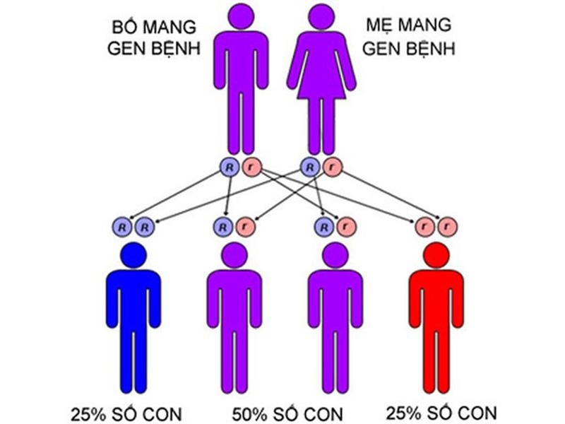Nếu cả cha và mẹ đều mang gen bệnh, tỷ lệ con cái mắc bệnh sẽ cao hơn