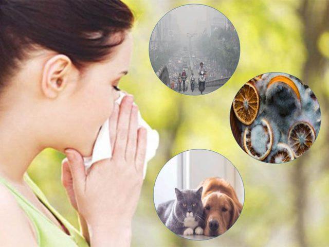 Các tác nhân gây viêm mũi dị ứng không lây lan từ người sang người