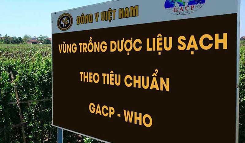 Vùng trồng dược liệu sạch của Trung tâm Đông y Việt Nam