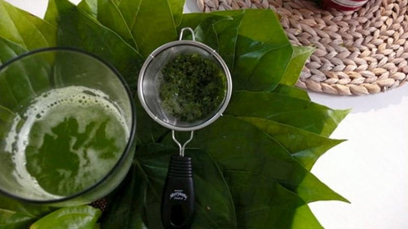 Uống nước lá trầu cũng là phương pháp trị bệnh được nhiều người sử dụng