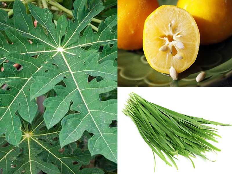 Kết hợp lá đu đủ, hạt chanh, lá hẹ để tăng hiệu quả điều trị