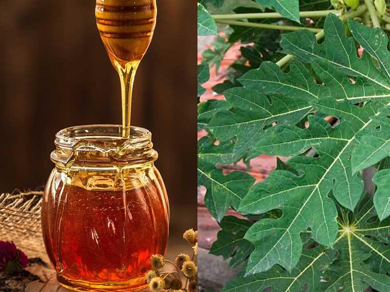 Chữa viêm họng bằng lá đu đủ và mật ong