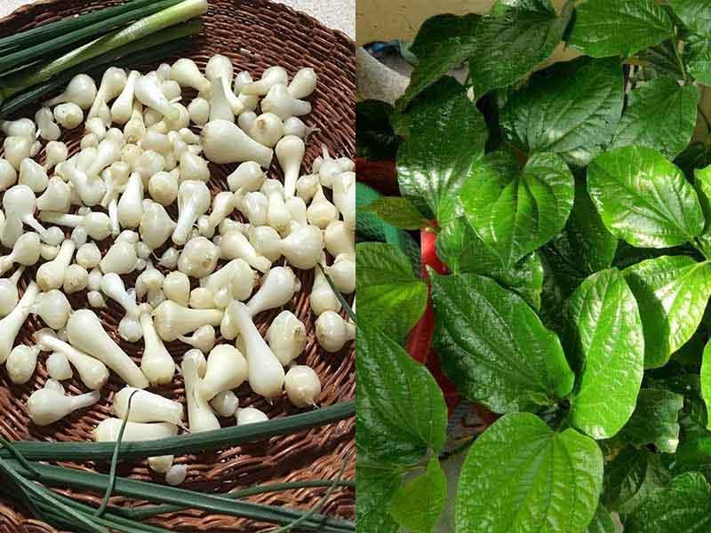 Hạt củ nén và lá trầu không khi kết hợp với nhau tăng gấp đôi hiệu quả điều trị