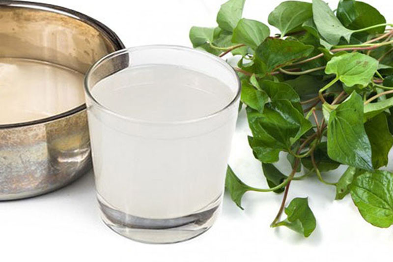 Bài thuốc chữa viêm amidan từ rau diếp cá và nước vo gạo phù hợp với rất nhiều người