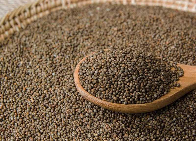 Bên cạnh lá, hạt tía tô cũng được sử dụng nhiều trong điều trị viêm amidan