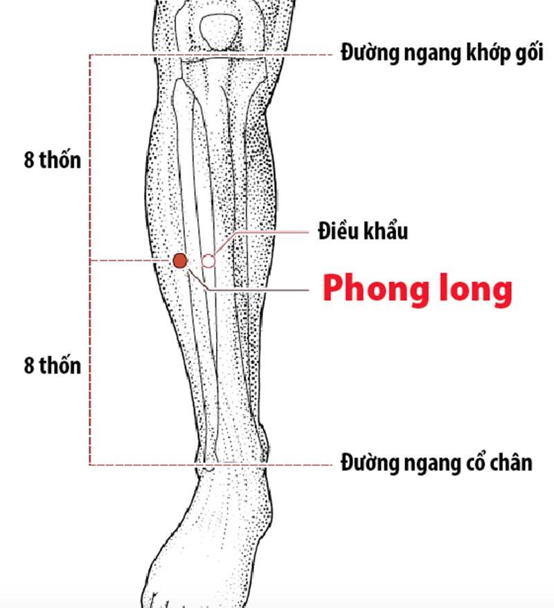 Huyệt Phong long nằm ở ngang bắp chân