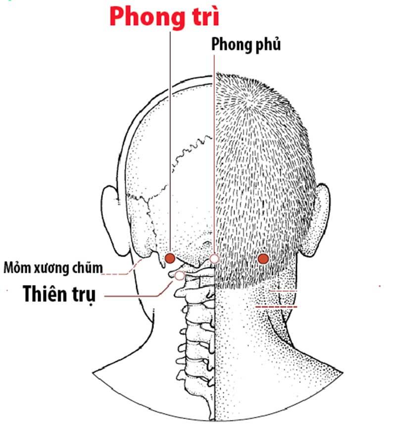 Huyệt Phong trì nằm ở đáy sọ