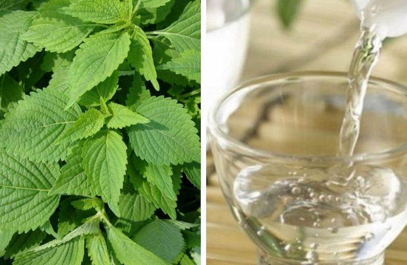 Rượu kết hợp kinh giới giúp giảm nhanh mẩn ngứa mề đay