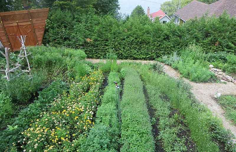 Vườn thảo dược đạt tiêu chuẩn GACP - WHO cung cấp thảo dược cho bài thuốc Thanh hầu bổ phế thang