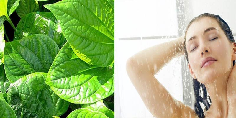 Cách tắm nước lá lốt phù hợp với những người bệnh bị viêm da cơ địa ở nhiều vùng da khác nhau trên cơ thể
