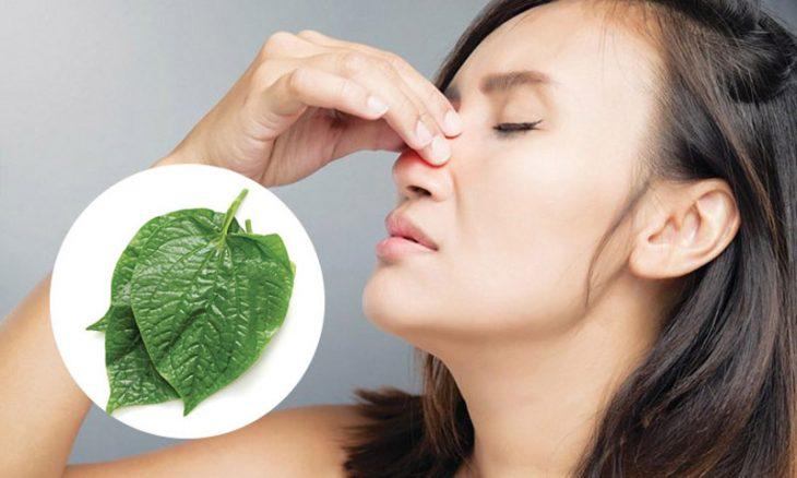 Chữa viêm mũi dị ứng bằng lá lốt phù hợp với trường hợp bệnh nhẹ