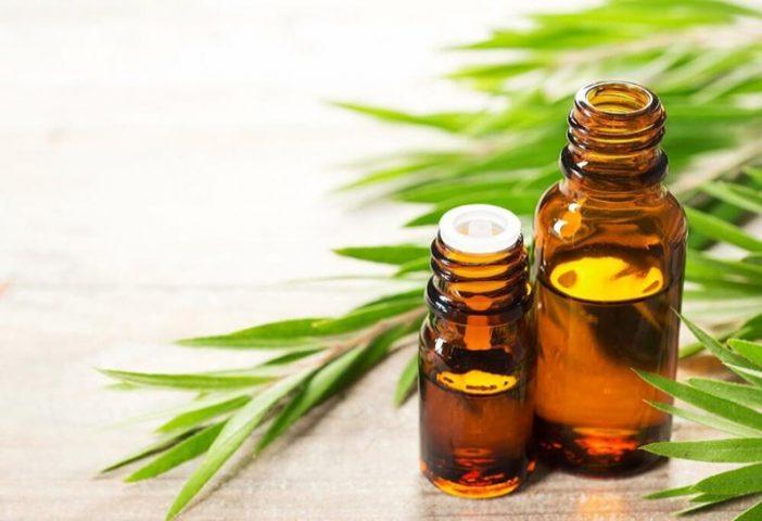 Tinh dầu trà có tác dụng kháng viêm, chống nấm trên da