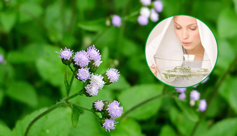 Bài thuốc xông trị viêm xoang từ hoa ngũ sắc dễ thực hiện, phù hợp với nhiều đối tượng khác nhau