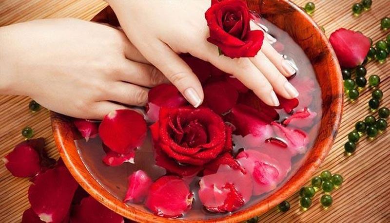 Hoa hồng chứa nhiều hoạt chất giúp kháng khuẩn, chống viêm, điều trị viêm hang vị dạ dày hiệu quả