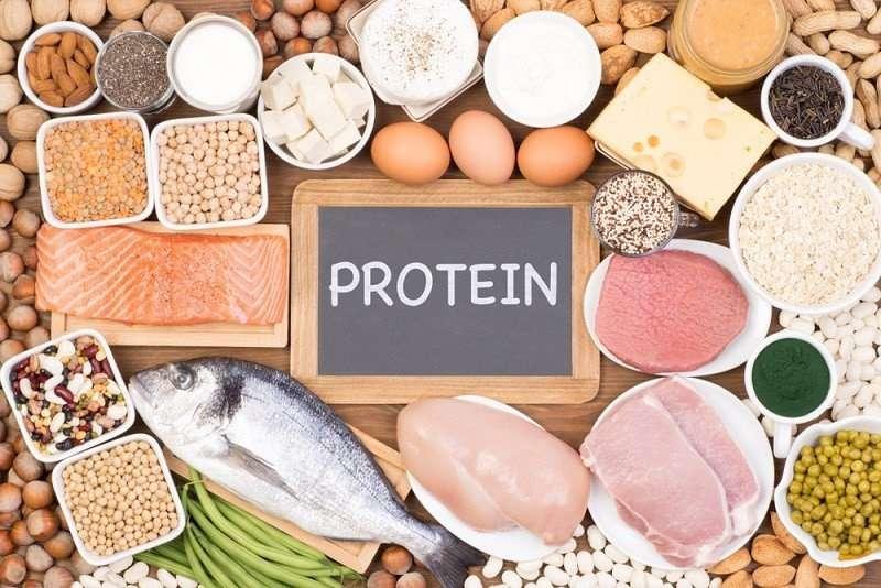 Protein tham gia trực tiếp vào sự phát triển thể chất của thai nhi và làm lành viêm loét trên niêm mạc dạ dày