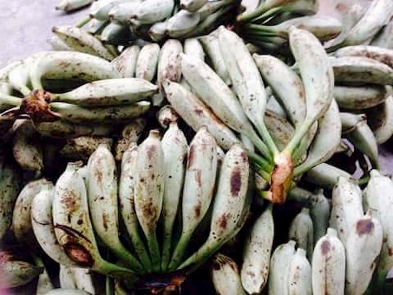Bài thuốc dân gian chữa viêm khớp cùng chậu từ quả chuối hột rừng