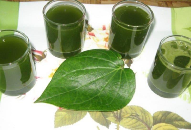 Hãm nước lá trầu không uống chữa bệnh hàng ngày