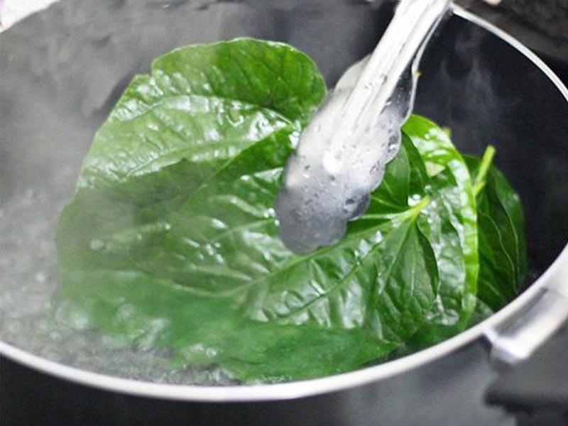 Uống nước lá lốt giúp dược tính của cây có thể đi sâu vào trong cơ thể