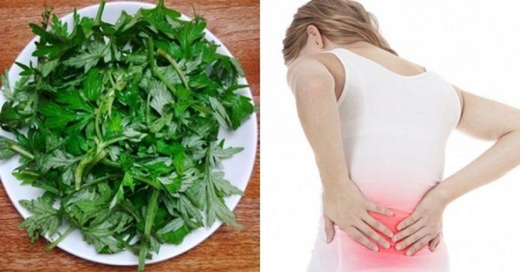 Chữa đau xương khớp bằng ngải cứu hiệu quả