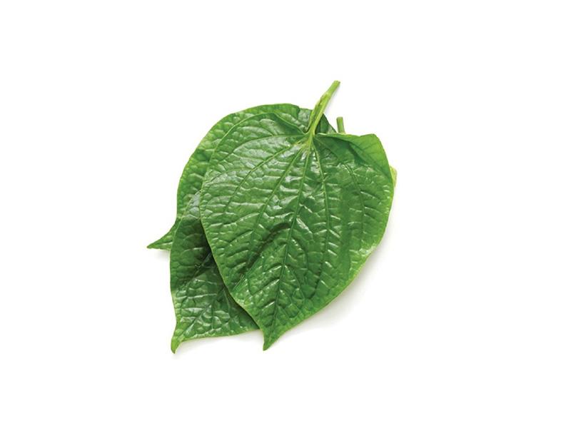 Chữa viêm đa khớp bằng thuốc nam từ lá lốt là phương pháp hiệu quả được nhiều người áp dụng