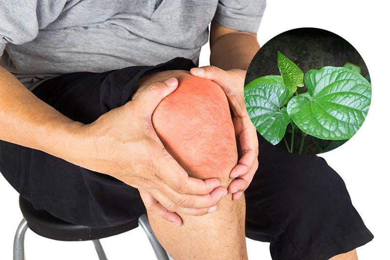 Chữa viêm khớp dạng thấp bằng thuốc nam cần chú ý một số vấn đề để đạt kết quả tốt