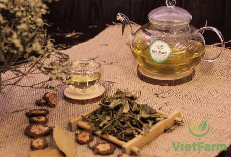 Dây thìa canh Vietfarm chất lượng cao đạt chuẩn GACP - WHO