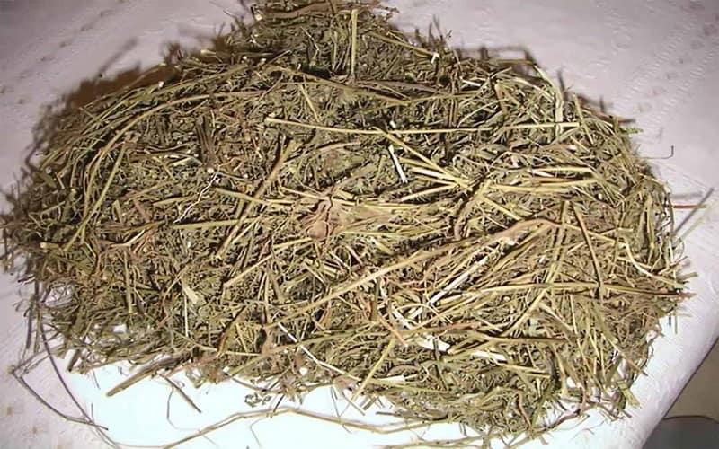 Tất cả bộ phận của cây đều được dùng làm thuốc