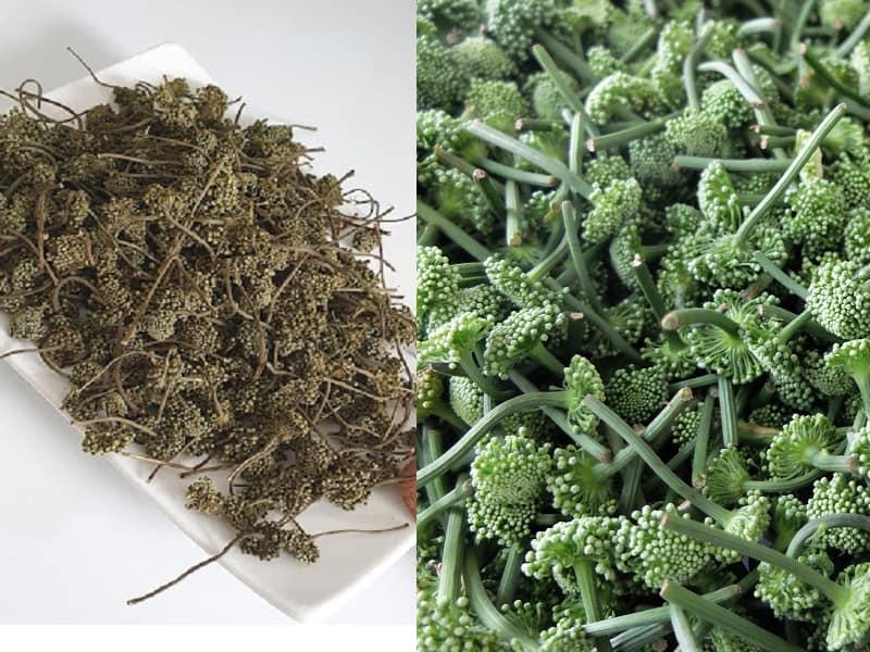 Dược liệu có thể sử dụng dạng tươi hoặc khô