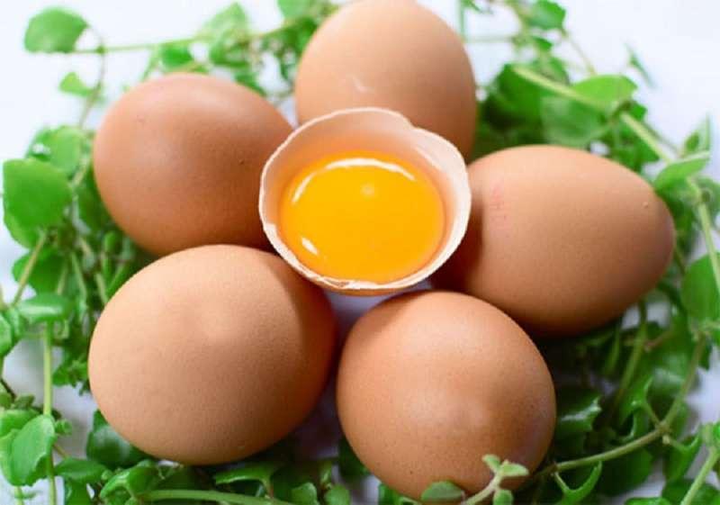xTrứng là thực phẩm có hàm lượng dinh dưỡng dồi dào