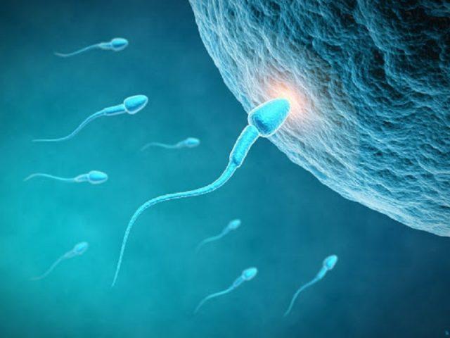 Tinh trùng ít là lượng tinh trùng xuất ra trong tinh dịch ít hơn bình thường