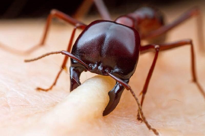 Viêm da tiếp xúc côn trùng là tình trạng xuất hiện tổn thương do côn trùng tấn công hoặc dịch tiết của chúng.