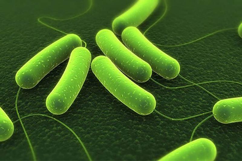 Vi khuẩn HP là một trong số những nguyên nhân chủ yếu gây bệnh