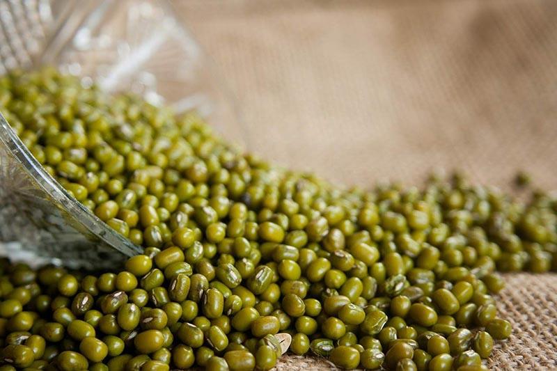 Nếu chưa biết ăn gì trị tiểu buốt bạn có thể tham khảo các món từ đậu xanh