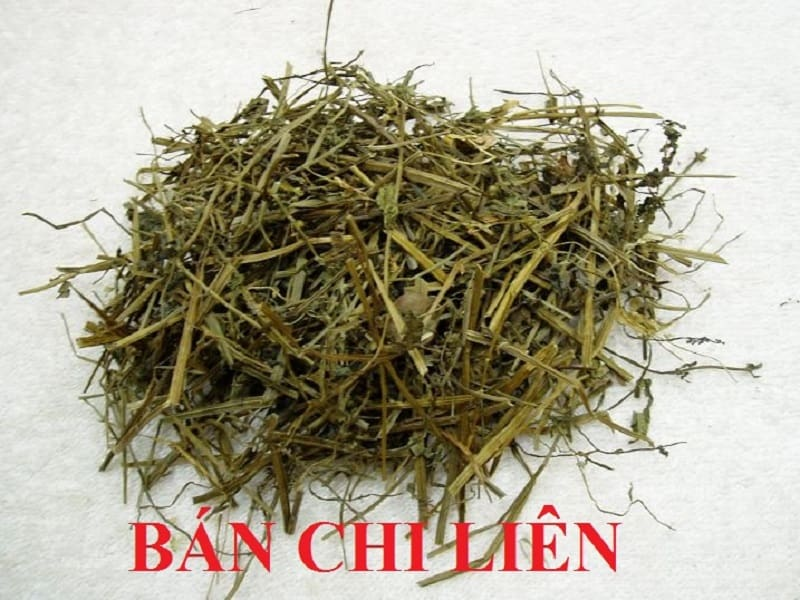 Có thể sử dụng dược liệu tươi hoặc khô