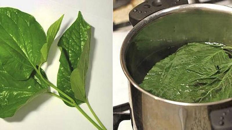 Bạn có thể dùng một số loại thảo dược như trà xanh, trầu không... để đun nước tắm